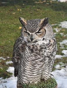 bird, birds, owl, animal, nature, carnivore, bird of Prey