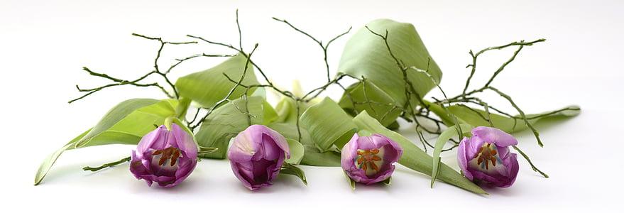 Tulip, tulpenbluete, Blossom, Bloom, blomster, forår, Violet