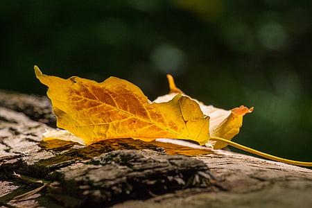 jeseni, listov, listi, Jesenski listi, barva, rumena, okolje