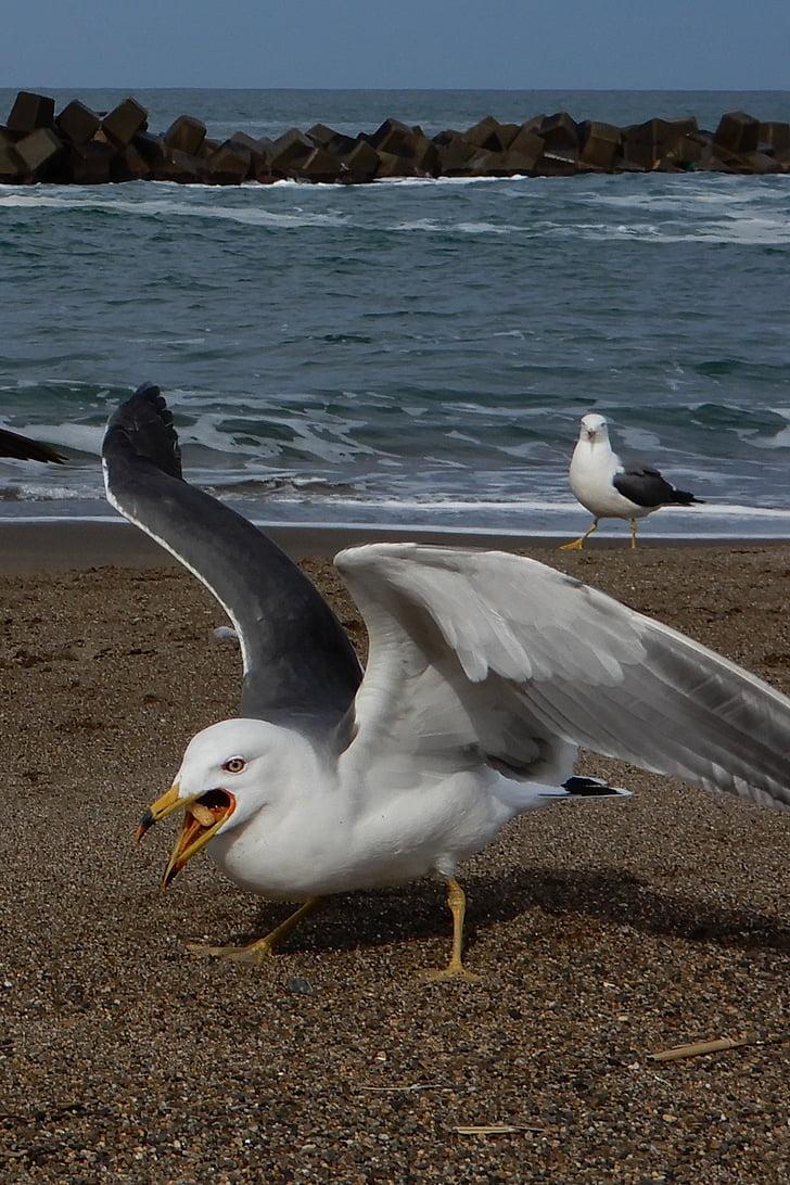 zvíře, Já?, pláž, vlna, Sea gull, Racek, Mořský pták