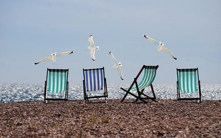 ljeto, plaža, galebovi, ležaljke, more, odmor, odmor