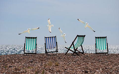 l'estiu, platja, gavines, gandules, Mar, vacances, vacances