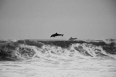 djur, däggdjur, delfiner, naturen, Söt, vilda djur, Lycklig