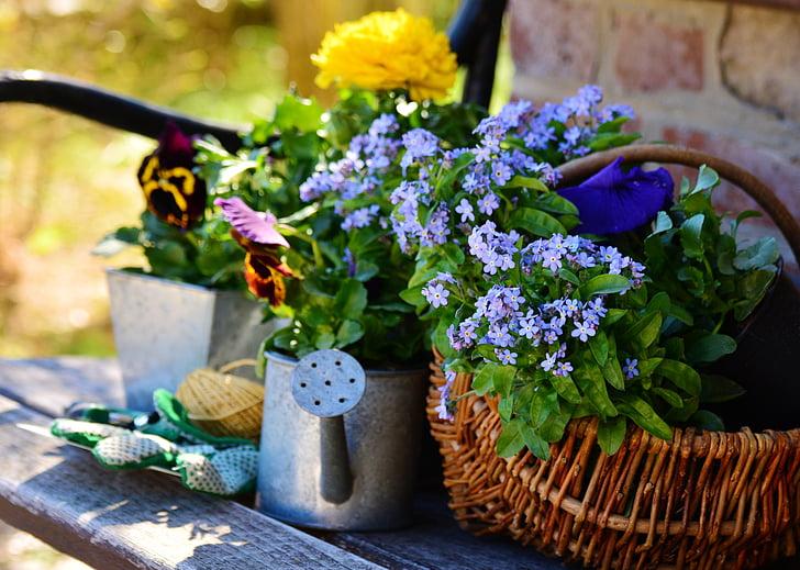 Foto livre: jardim, flores, plantar flores, jardinagem, Primavera ...