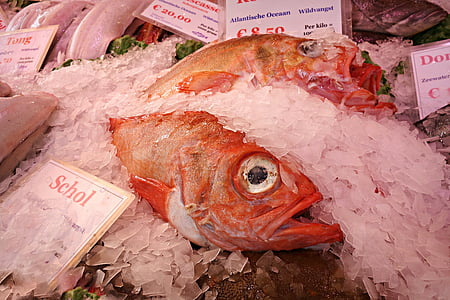 fish, animal, seafood, fresh, fresh fish, raw fish, market