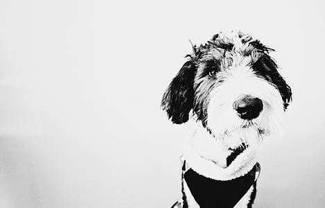 câine, catelus, animale, negru, alb, alb-negru, monocrom