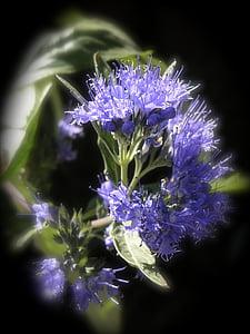 Hisop, ysopblüte, espècies, herbes culinàries, sal de cuina, herbes de cuina, herba