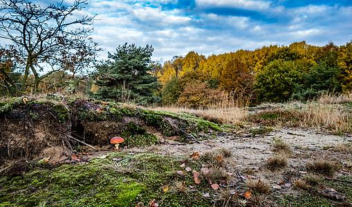 Мухомор, Гриб, токсичные, Природа, Осень, лес, лесных грибов