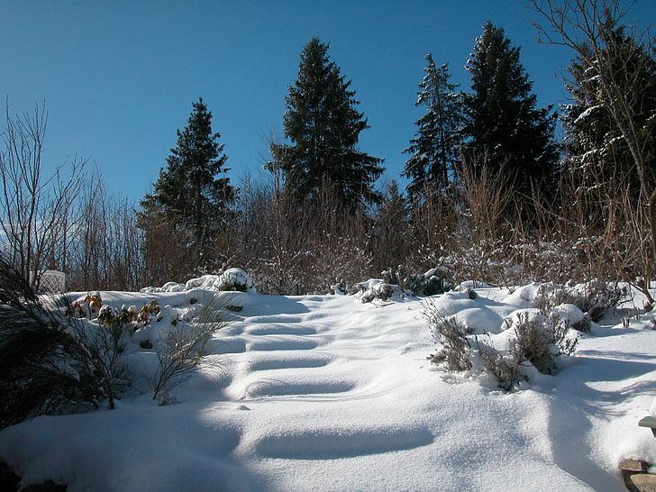winter, snow, nature, fir forest, firs, landscape, swabian alb