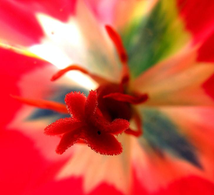 brittiska, Flora, grön, röd, blomma, ljus, Anläggningen