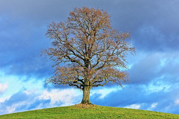 дърво, природата, пейзаж, сезони, облаците, слънчева светлина, слънце
