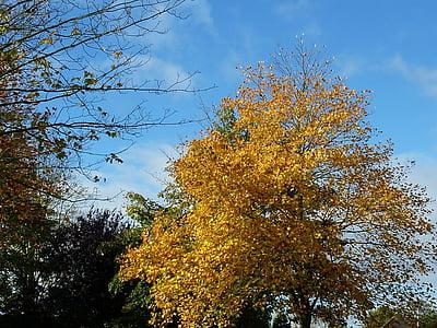 sonbahar ruh hali, sonbahar yaprakları, Sonbahar, yaprakları, sonbahar yaprakları, Altın sonbahar, Sarı