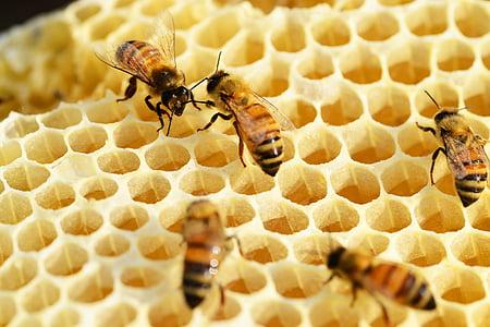 abelles, construir bresca, mel, abelles de mel, bresca, buckfast, pintes