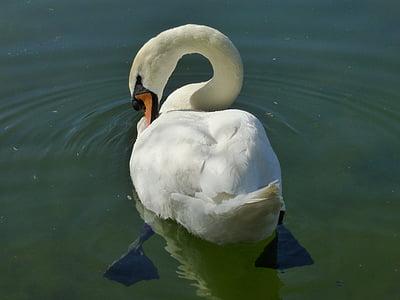 Природа, птица утка, Белый Лебедь, птица, Лебедь, животное, озеро