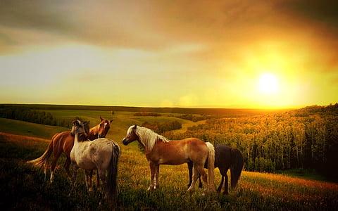 horses, sun, forest, way, mountains, landscape, nature