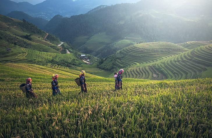 농업, 아시아, 발리, 캄보디아, 중국, 지구, 곡선