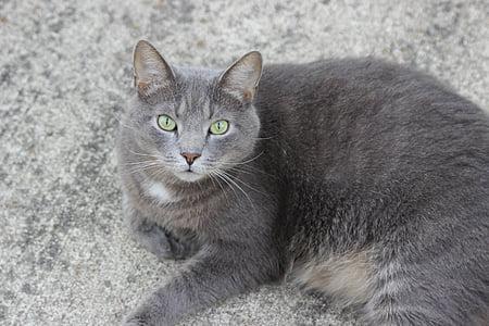 cat, feline, animal, cute, mammal, home, kitty