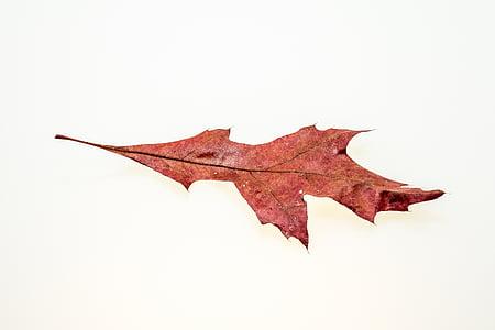 το φθινόπωρο, φύλλα, φύλλο, φύλλωμα πτώσης, χρώματα του φθινοπώρου, φύλλα το φθινόπωρο, φύση