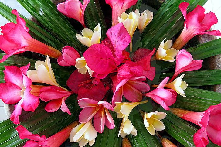 Бугенвиль, цветок, Букет, розовый, Белый