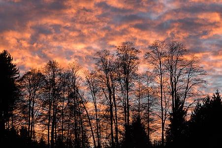 bakgrundsbelyst, Dawn, skymning, naturen, natursköna, siluett, Sky