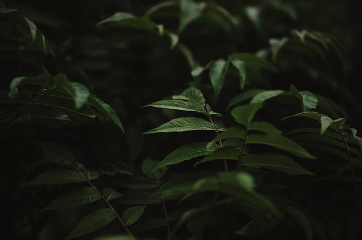 Yeşil, yaprak, bitki, doğa, Açık, karanlık, yeşil renk