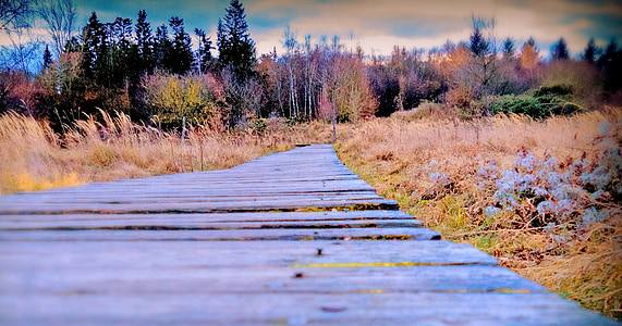 autumn, away, wooden track, trees, nature, landscape, autumn day