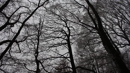 bosc, fosc, crepuscle, bemoost, estrany, arbres, natura