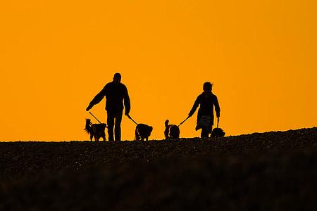 Beach, Sunset, folk, hunde, silhuetter, et par af, romantisk