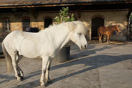 konj, bijeli, kalup, bijeli konj, priroda, konjsku glavu, životinja