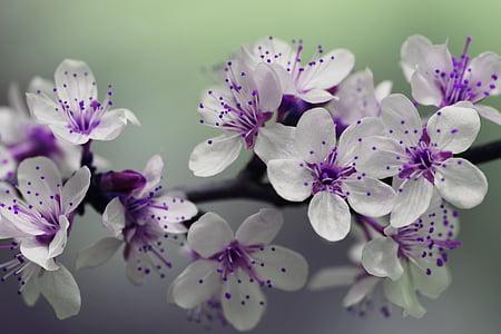 flor, pètals, primavera, natura, flor, flor, planta