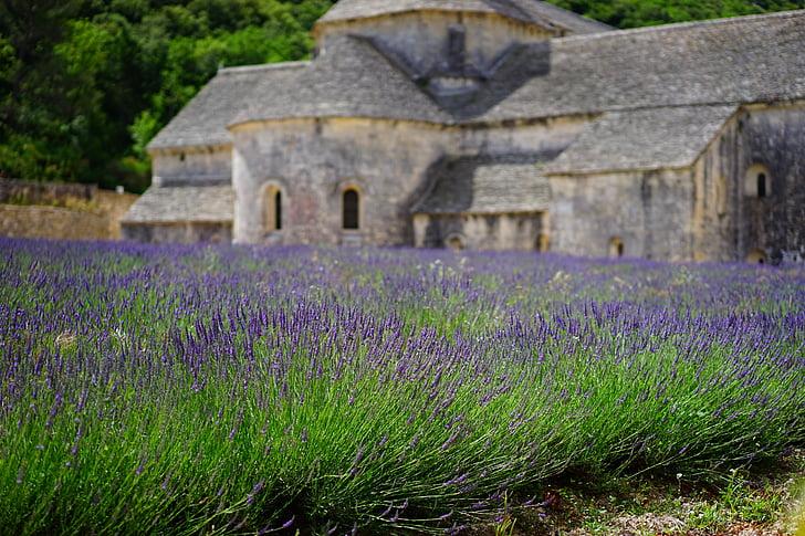 Levanda, gėlės, mėlyna, levandų laukas, Abbaye de senanque, vienuolynas, abatija