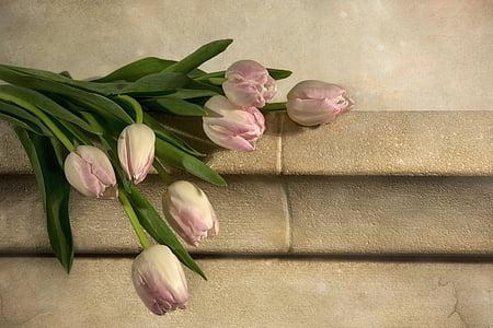 Tulipani, natura, fiori, della sorgente del tulipano, tulipano, primavera, rosa