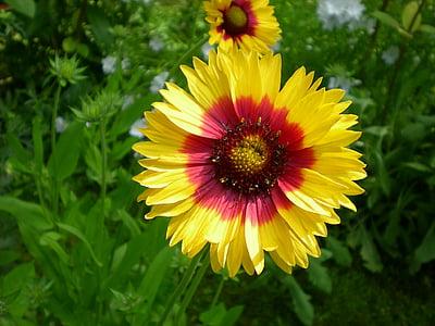 flowers, marigold, garden, flower, fragility, petal, freshness