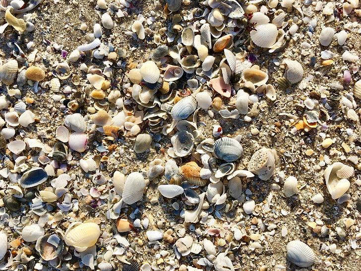 petxines, platja, sorra, Costa, natura, petxines, textura
