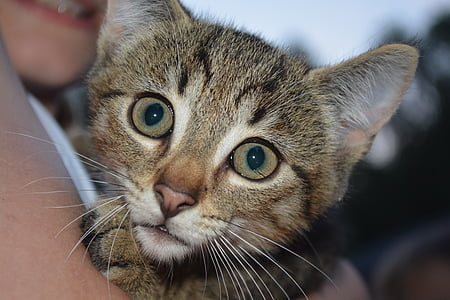 cat, baby, kitten, face, eyes, snout, whiskers