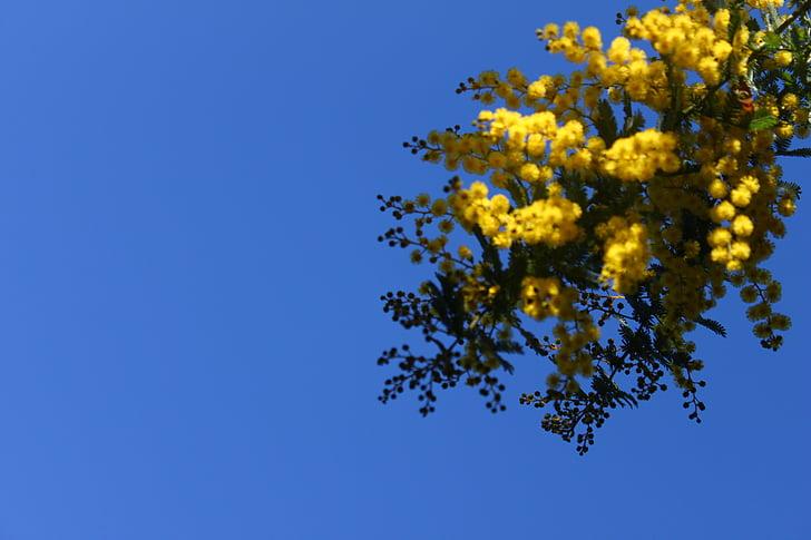 cvet, nebo, cvetje, pomlad, narave, cvetoče, rumena