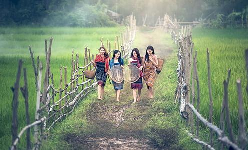 chica, campo, Ruta de acceso, haciendo un trabajo, rama, agricultura, Asia