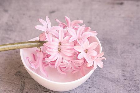 hyacinth, pink, pink hyacinth, flower, pink flower, spring flower, fragrant flower