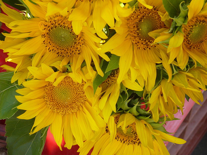 Цветок солнца, Семена подсолнечника, Масло подсолнечное, подсолнечник, рынок, Standl, Букет