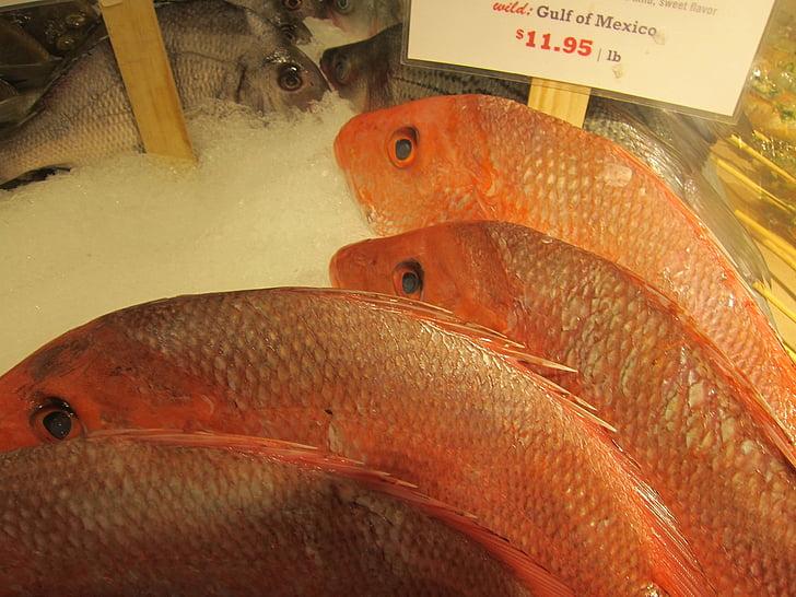 riba, Snapper, Ribarnica, marinac