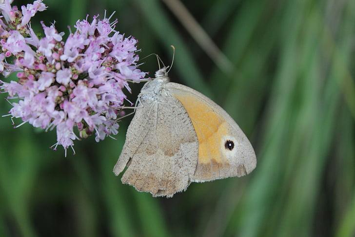 naturopathy, narave, divjih zelišč, metulj, prosto živečih rastlinskih, blizu, rastlin