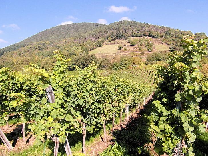 uue veini, veini, Vintage, veini saagi, viinamarjad