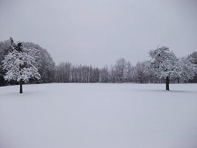 invierno, árboles, nieve, cubierto de nieve, invernal, magia de la nieve, paisaje