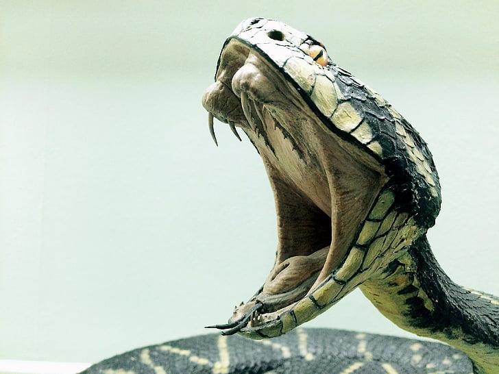con rắn, rắn hổ mang, nguy hiểm, bò sát, động vật, Thiên nhiên, Quà tặng