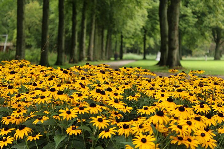 желтый, цветок, Лейн, Парк, Желтые цветы, фон цветы