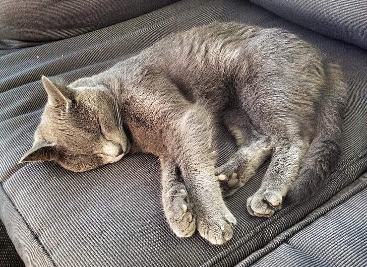 kucing, tidur, sofa, abu-abu