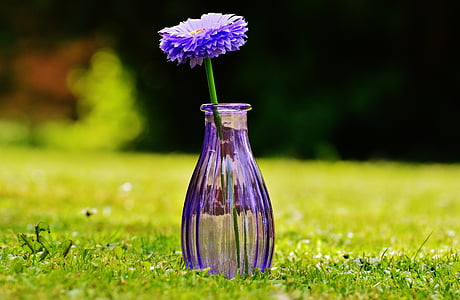 vase, glas, blomst, dekoration, lilla, gennemsigtig, Deco