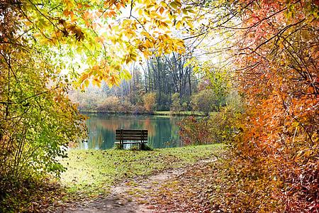 jeseni, padec, sezona, spadajo listi ozadje, Jesenski listi, oktobra, padec ozadja