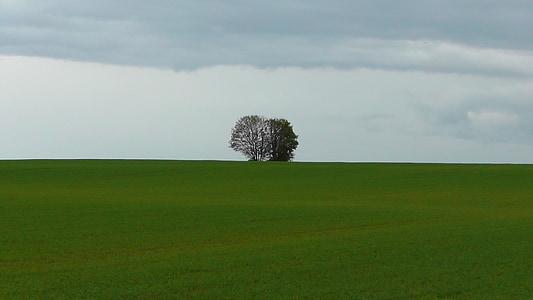 strom, Príroda, Príroda, stromy, prírodné, Zelená, osamelý