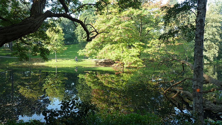 Bremen, Parc de ciutadans, natura, paisatge, tardor, arbre, fulles